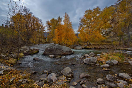 Russia. South Of Western Siberia. Mountain Altai. Early autumn morning on the coast of the Big Ilgumen river near the village of Kupchegen. 免版税图像