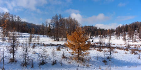 Russia. The South Of Western Siberia. Late autumn in the Altai mountains 免版税图像