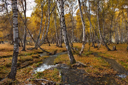 Russia. South Of Western Siberia. Mountain Altai. Early autumn morning on the coast of the Big Ilgumen river near the village of Kupchegen. Stock fotó