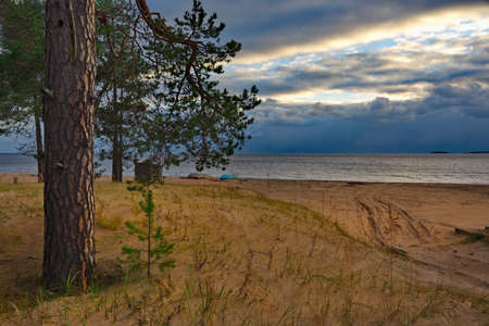 Russia. Republic of Karelia. A picturesque sunset in a pine forest on the north-eastern shore of Lake Onega.