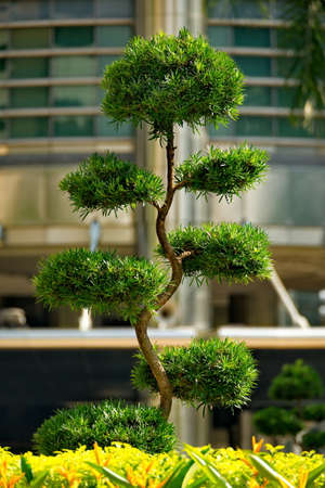 Kuala Lumpur. Malaysia. Decorative surreal trees in the park in front of the entrance to the Petronas Twin Towers.