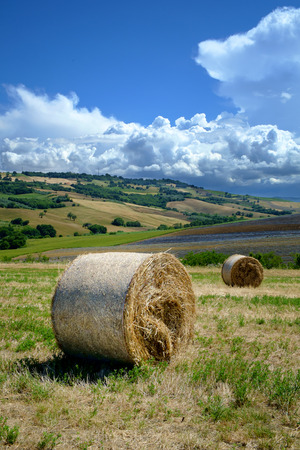 countryside landscape: Round bales in a countryside landscape