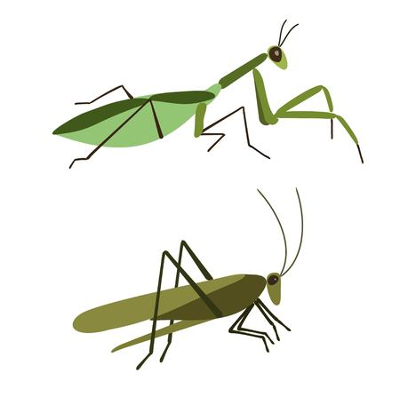 mantis: Insects vector set. Vector Mantis and vector grasshopper isolated on white background. Mantis and Grasshopper in flat style. Insect cartoon set. Grasshopper isolated. Insect cartoon set.