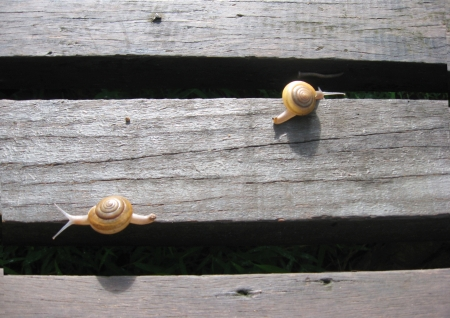 Snail moving