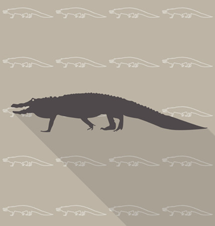 zoo amphibian: Crocodile vector Illustration