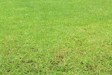 lawn grass: Hierba verde c�sped natural,