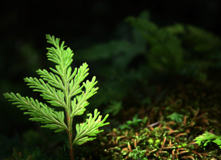 gradually: A small sapling gradually growing in the forest. Stock Photo