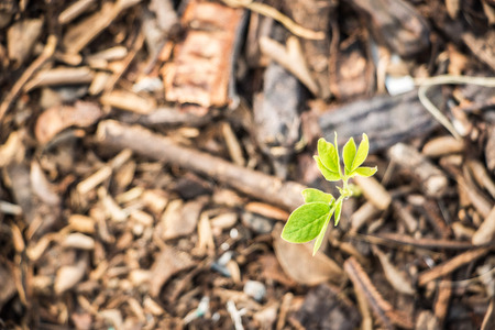 tillage: Sapling of trees are growing.