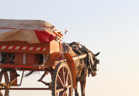 horse drawn carriage: A hard working horse waits to start working in Cairo, Egypt Stock Photo