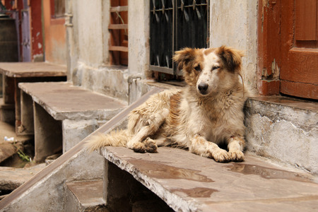 A stray dog resting on the stairs in India