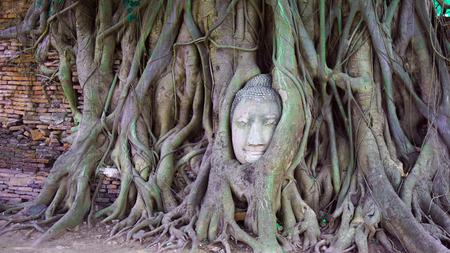 cabeza de buda: Cabeza de Buda en el árbol de raíz