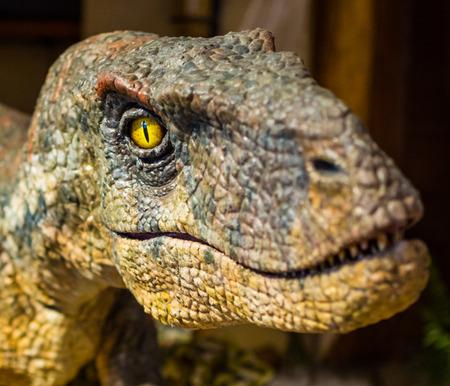 face close up: Dinosaur face close up, focus on eye Stock Photo