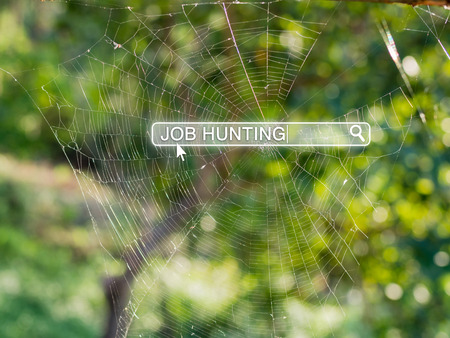 Job hunting in search box on spider web, job search and human resource concept