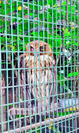 caged: Owl in a cage