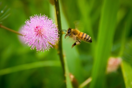 groen, bijen, flora