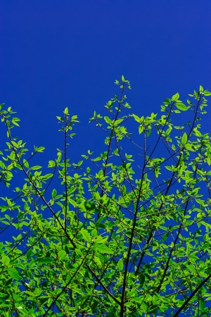 green leaf,sky, blue