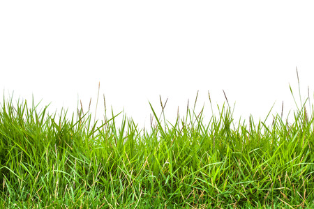 closeup of grass on a white background photo