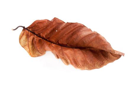 Dry leaves on white