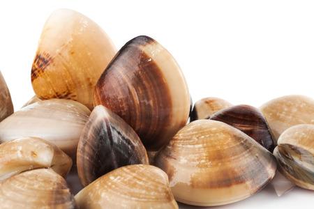 enamel: enamel venus shell on a white background Stock Photo
