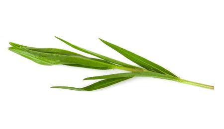 tarragon: Tarragon herbs close up isolated on white
