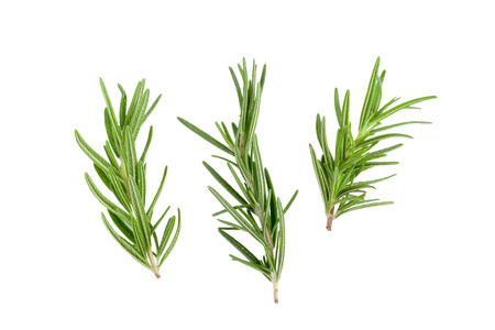 green herbs: rosemary isolated on white background