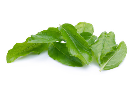 antidote: Holy basil or tulsi leaves isolated over white background