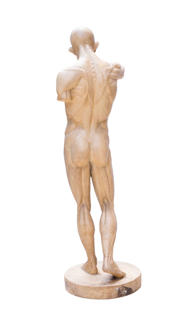 anatomy nude: model emulation Resin muscular human anatomy model for Art