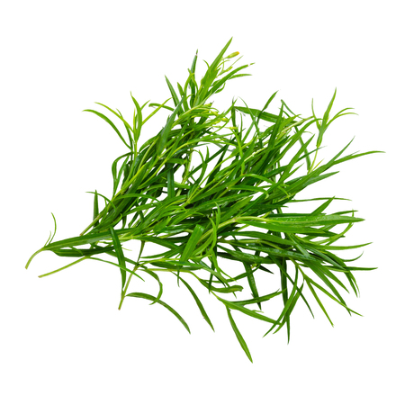 herbs: Tarragon herbs close up isolated on white