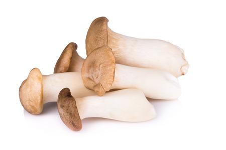 흰색 배경에서 새송이 버섯 (Eringi).