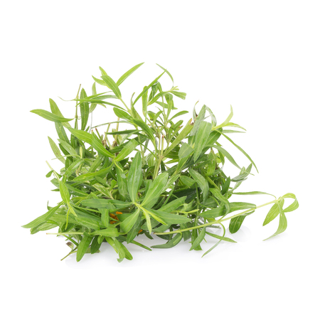 no: Tarragon herbs close up isolated on white.