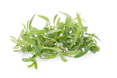 no image: Tarragon herbs close up isolated on white.