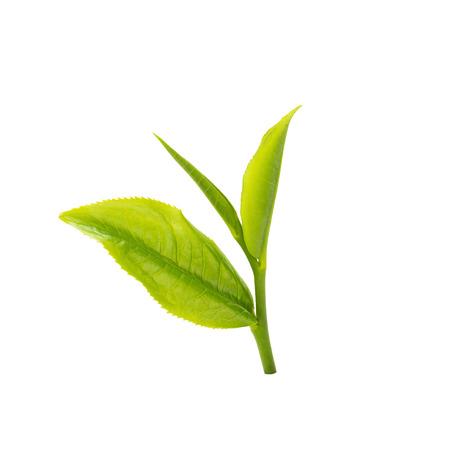groen theeblaadje dat op witte achtergrond wordt geïsoleerd. Stockfoto