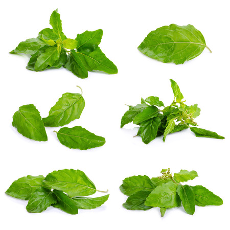 favoring: Sweet Basil isolated on a white background Stock Photo