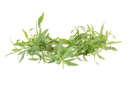 tarragon: Tarragon herbs close up isolated on white.