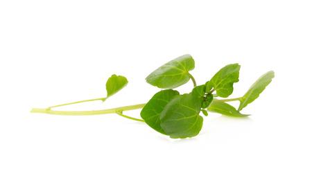 watercress: Fresh Watercress isolated on white background.