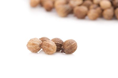 culantro: semillas de cilantro sobre fondo blanco.