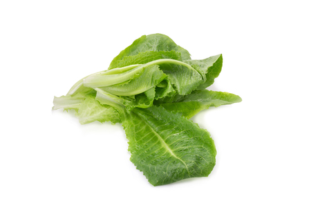 cos: Cos Lettuce on White Background.