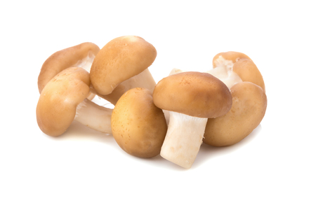 jhy: Shiitake Mushrooms isolated on the white background. Stock Photo