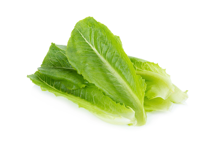 cos: Fresh baby cos lettuce on white, Romaine or cos lettuce leaves, Cos Lettuce Isolated on White Background