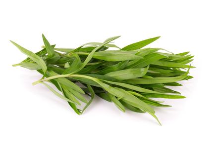tarragon: Fresh tarragon herbs, Tarragon herbs close up isolated on white