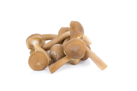 hon: Shimeji mushrooms brown varieties, Hon Shimeji edible exotic mushrooms, Brown beech mushrooms, Shimeji mushroom, Edible mushroom isolated on white background Stock Photo