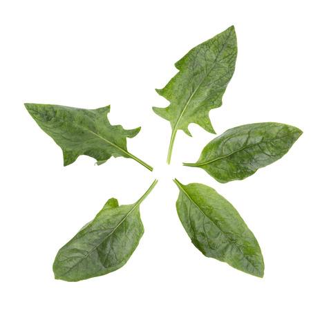 amaranth: Fresh amaranth leaves isolated on white background. Stock Photo
