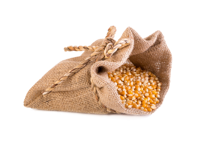 grain corn in small sack isolated on white background.