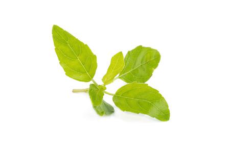 colic: Holy Basil,Ocimum sanctum isolate on white. Stock Photo