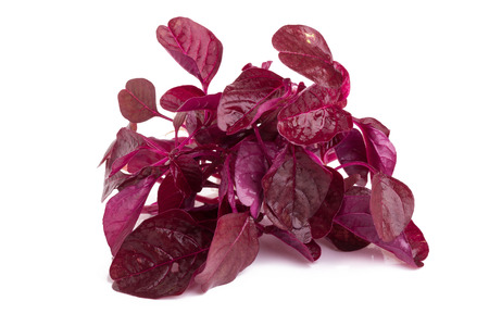 red spinach isolated on white background