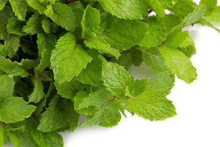 mint on white background.