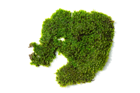 green mos on white background. Stock fotó