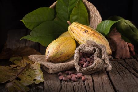 카카오 열매, 원시 카카오 콩, 나무 배경에 코코아 콩깍지.
