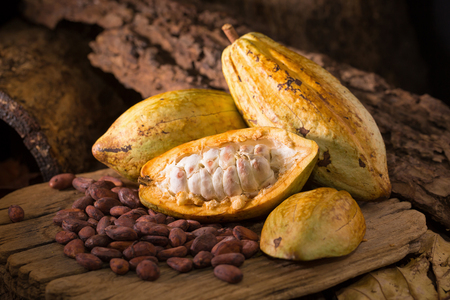 Cacao fruit, raw cacao beans, Cocoa pod on wooden background.