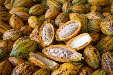 Cacaofruit, ruwe cacaobonen, de achtergrond van de Cacaopeul.